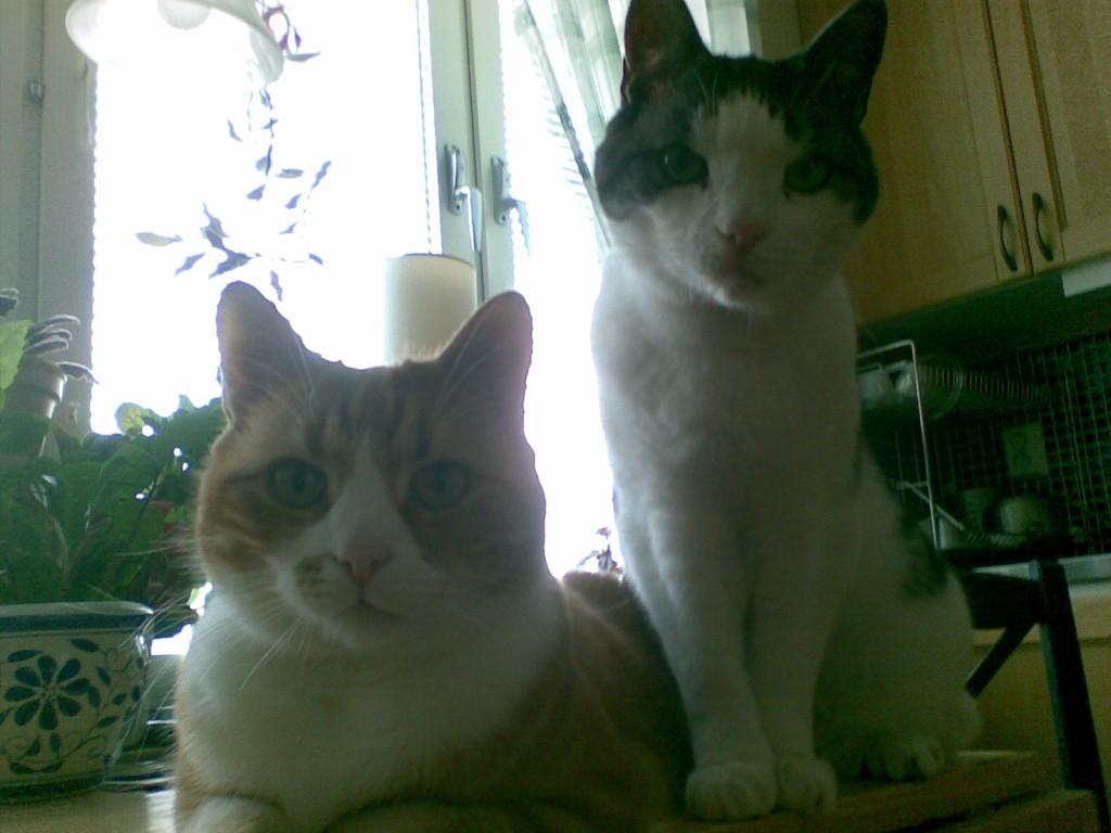 allvarliga-katter