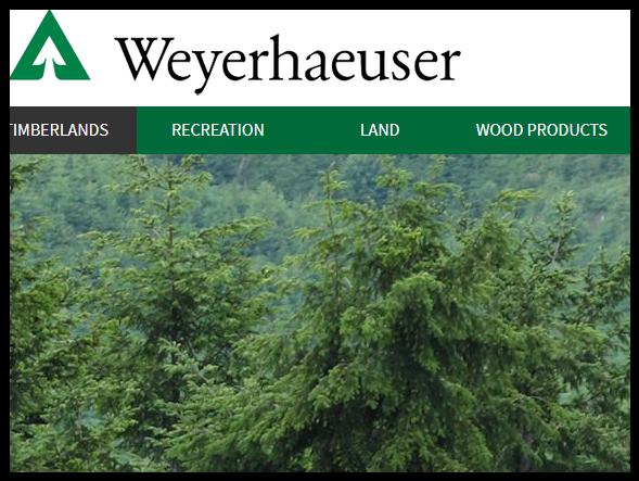 Weyerhaeuser - USA:s största skogsägare.