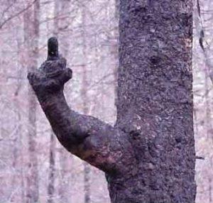 Träd som ger dig fingret.