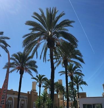 Mycket att tänka på när jag tog lån i Spanien för att köpa bostad där. Palmer vid hamnen i Funegirola